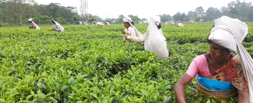 tea workers for web2