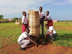 Loyola Secondary School students plant and protect a mango tree.