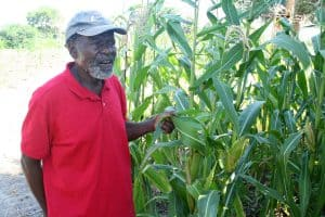 Aggai Nzonzo with his healthy maize crop. (Photo: C. Hincks/CJI)